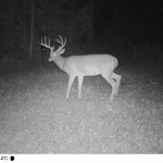 Chase Morland Trail Cam (1)