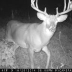 trail camera cons